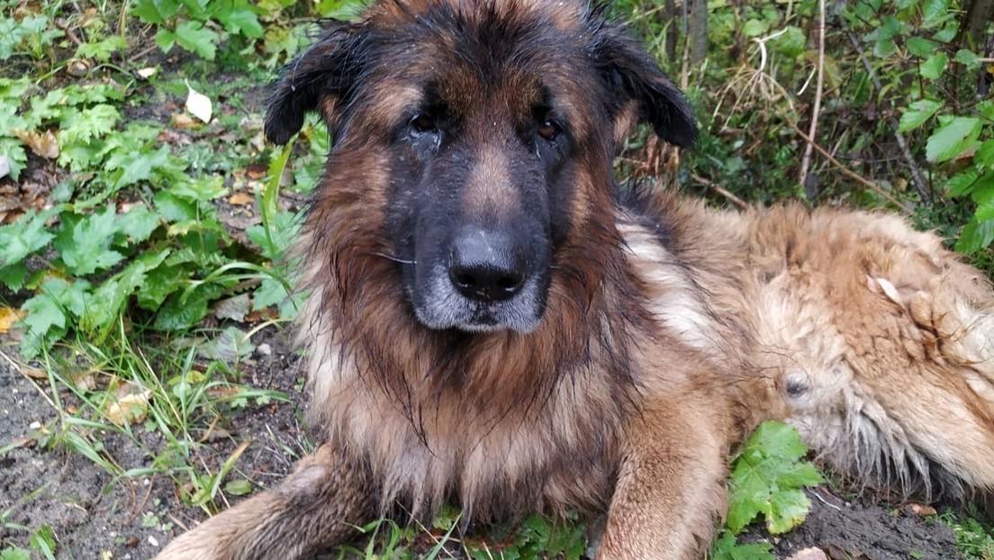 Un perro que sobrevivió tras ser sacrificado escapa de su tumba y va a buscar a sus dueños