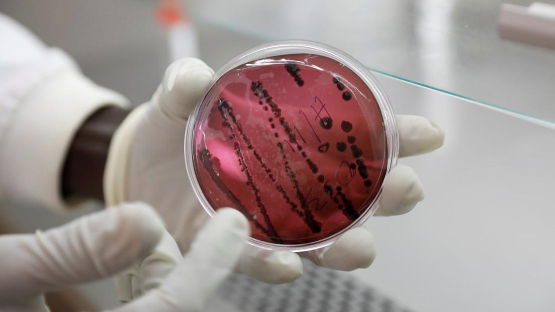 Un nuevo virus letal similar al Ébola y que se contagia de persona a persona prende las alertas tras un brote en Bolivia