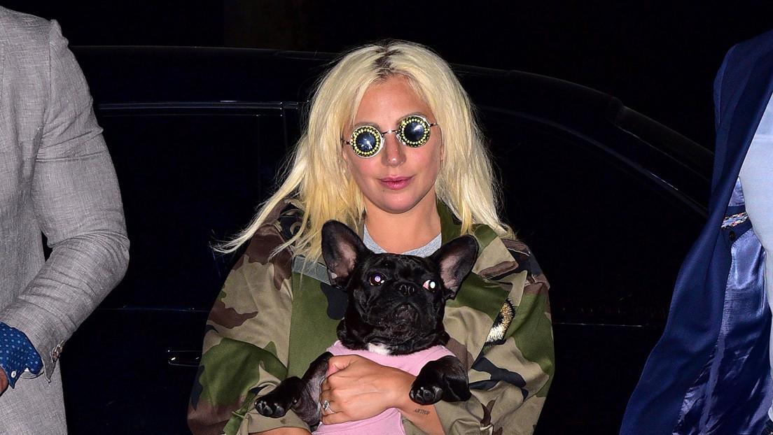 Balean al paseador de perros de Lady Gaga para robarle dos bulldogs franceses y la artista ofrece una recompensa de 500.000 dólares por sus mascotas